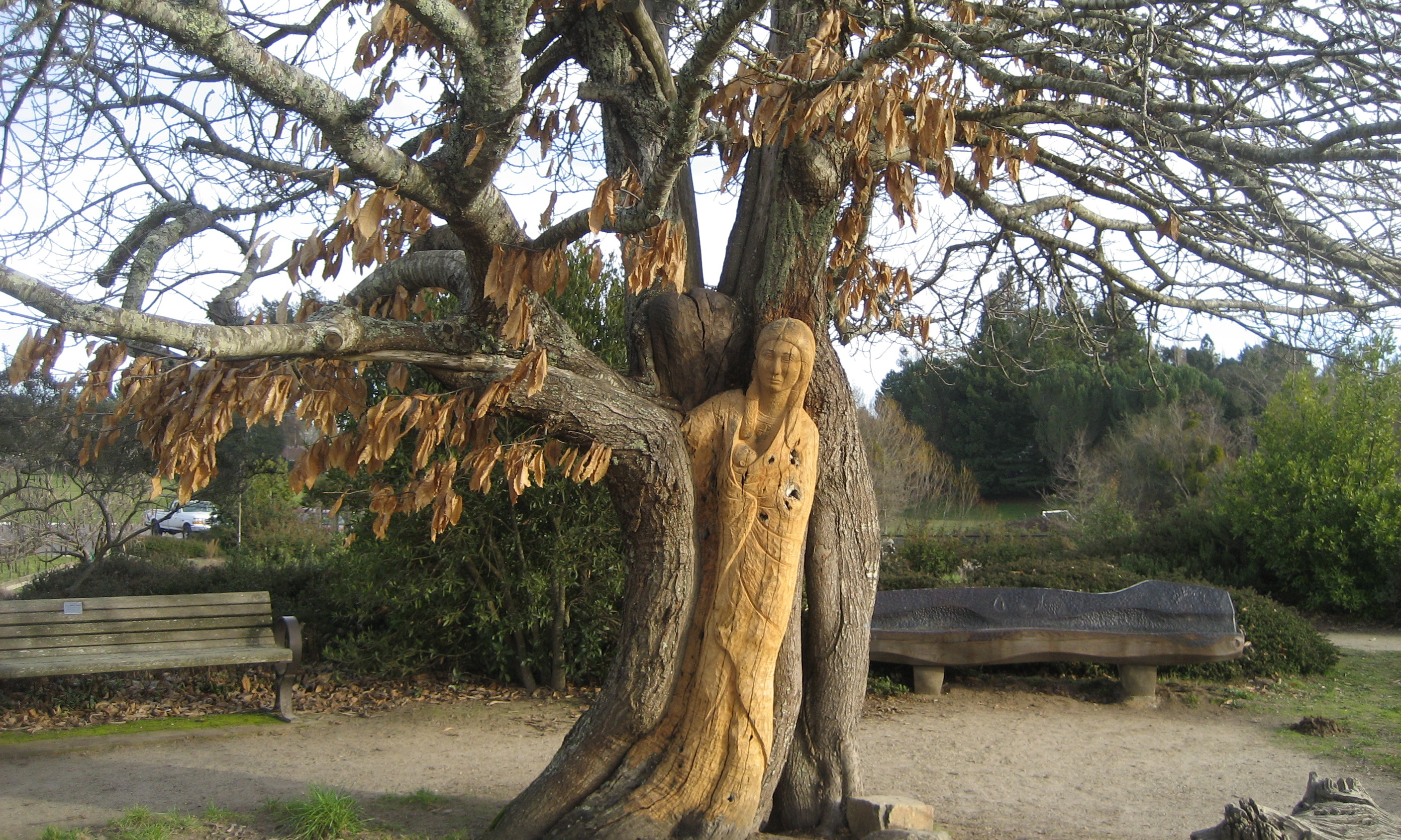 Finding your special place the strega and the dreamer for The chestnut