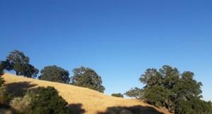 sarah oaks